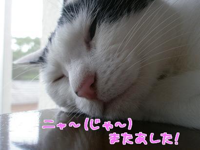 P6264559編集②.jpg
