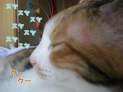 P7094973編集②.jpg