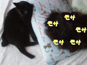 P7295738編集②.jpg