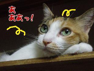 P7305783編集②.jpg