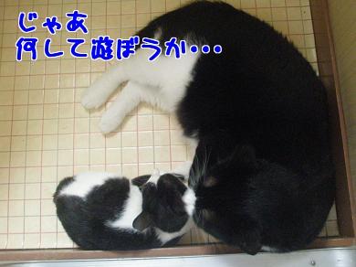 P9110506編集②.jpg