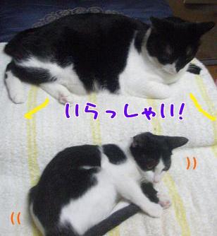 P9110529編集②.jpg