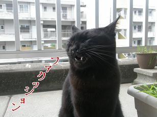 PA249155編集②.jpg