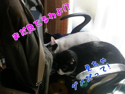 PB270524編集②.jpg