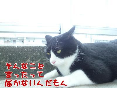 P1030070編集②.jpg