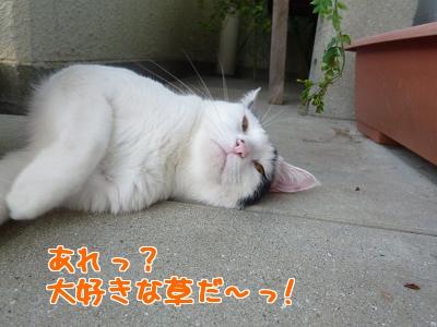 P1030152編集②.jpg