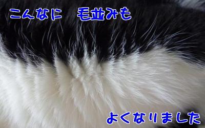 P1030528編集③.jpg