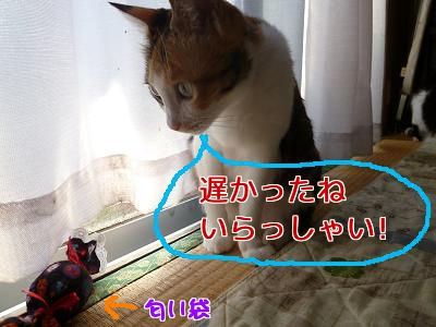 P1040647編集②.jpg