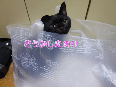 P1060369編集②.jpg