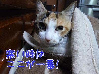 P1080852編集②.jpg