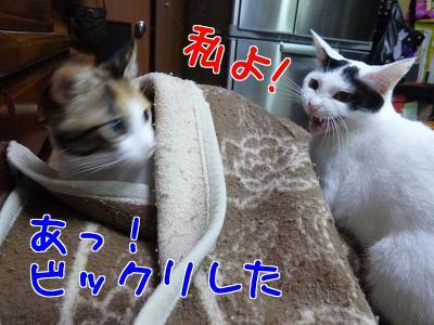 P1080858編集③.jpg