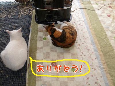 P1090134編集②.jpg