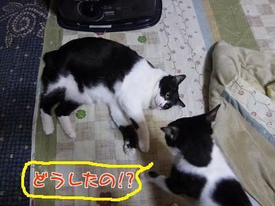 P1090641編集②.jpg