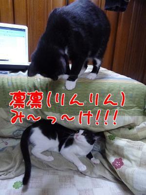 P1090715編集②.JPG
