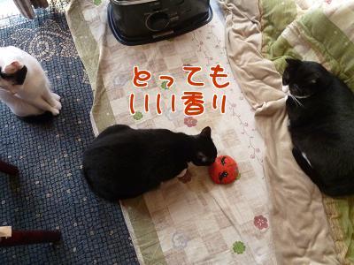 P1090774編集②.JPG