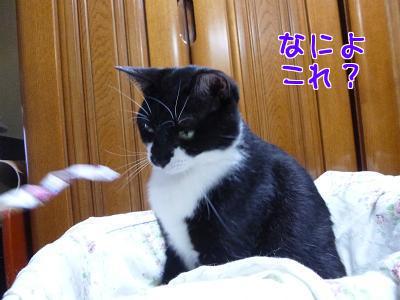 P1110736編集②.jpg