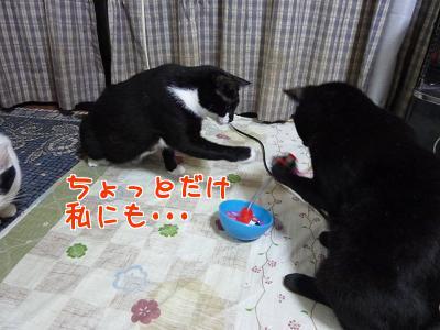 P1120045編集②.JPG