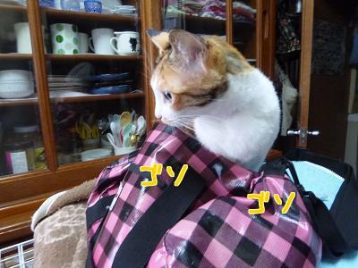 P1120815編集②.jpg