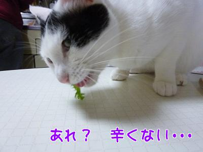 P1140571編集②.jpg