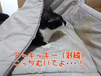 P1150404編集②.jpg