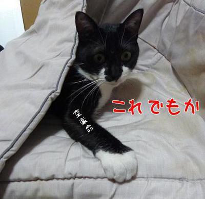 P1150417編集②.jpg