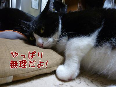 P1150558編集②.jpg