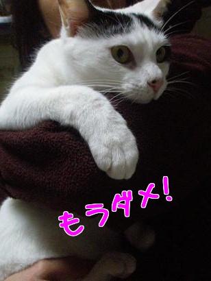 P2033132編集.jpg