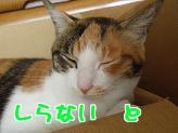 P2203840編集.jpg