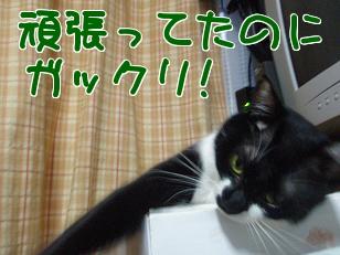 P3290925編集②.jpg