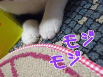 P4091601編集②.jpg