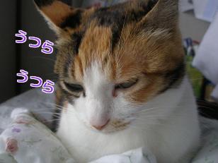 P5032744編集②.jpg