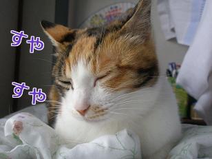 P5032745編集②.jpg