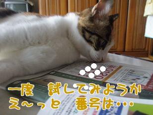 P5223625編集②.jpg