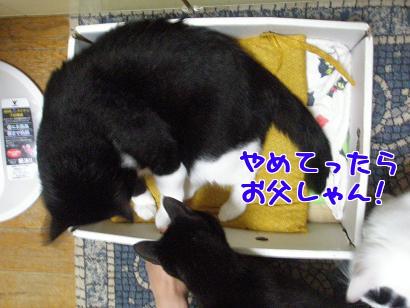 P6013840編集②.jpg