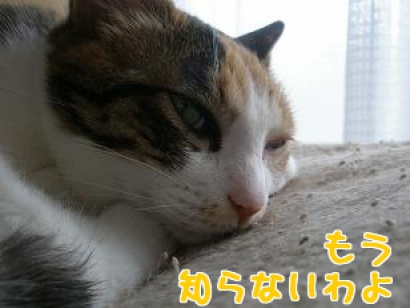 P6033888編集②.jpg