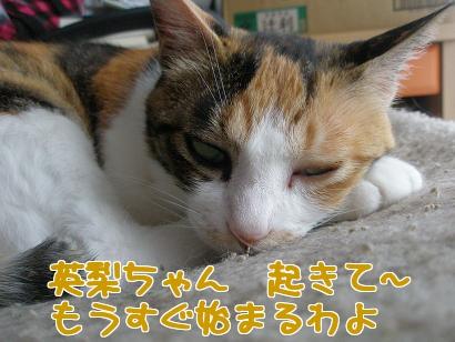 P6033889編集②.jpg
