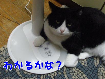 P6144306編集②.jpg