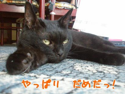 P7105079編集②.jpg