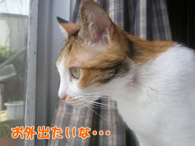 P9110462編集②.jpg